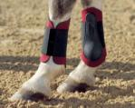 Tendon Boots - Neoprene pony boots coloured - front